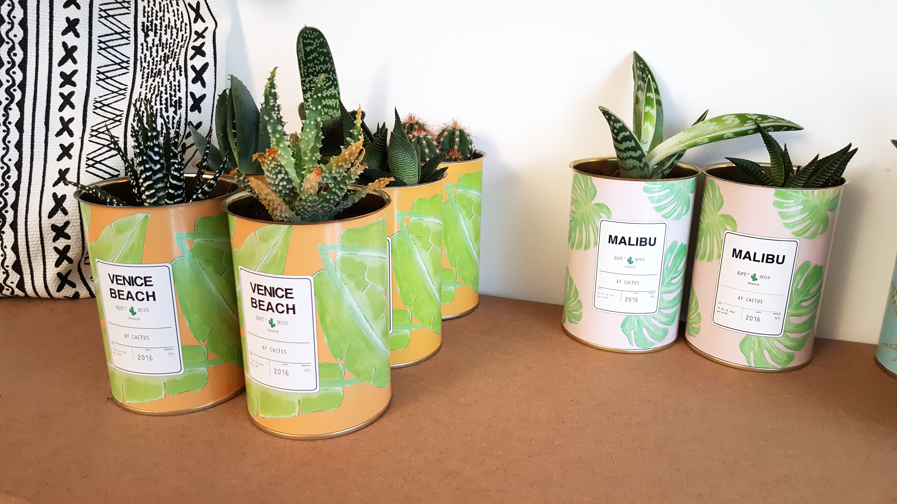 acheter cactus. Black Bedroom Furniture Sets. Home Design Ideas