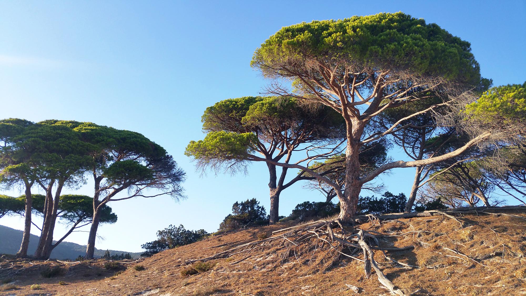 5 endroits incontournables en Corse - Porto Vecchio